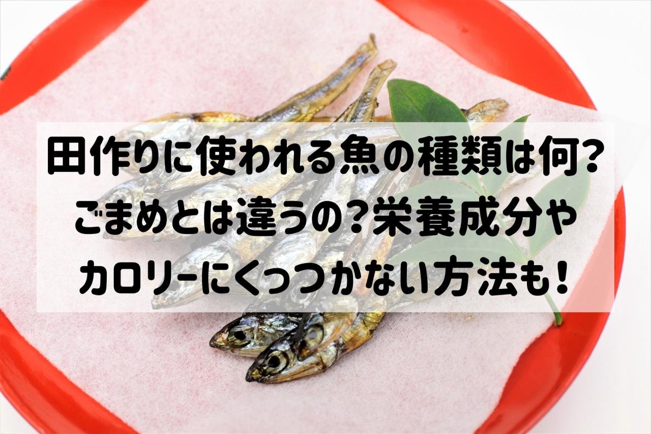 田作り 魚 種類